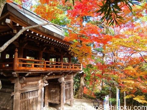 大窪寺の山門の紅葉