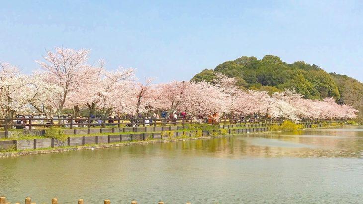 さぬき市【長尾寺】とさくら並木と菖蒲が見事な【亀鶴公園】と【宇佐神社】