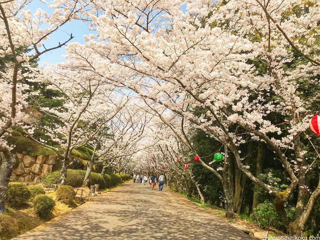 公渕公園の桜並木