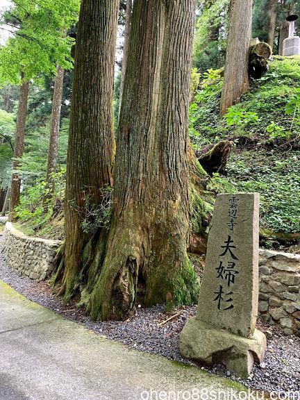雲辺寺の夫婦杉