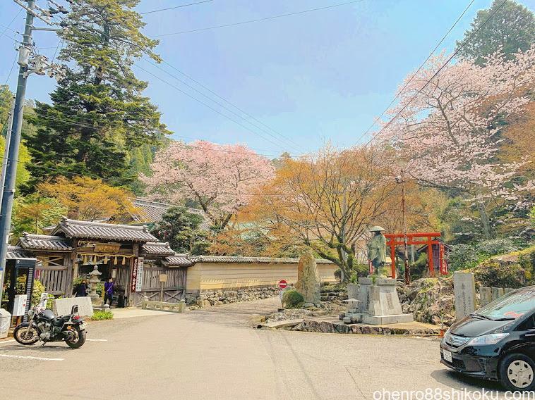 白峯寺駐車場と桜