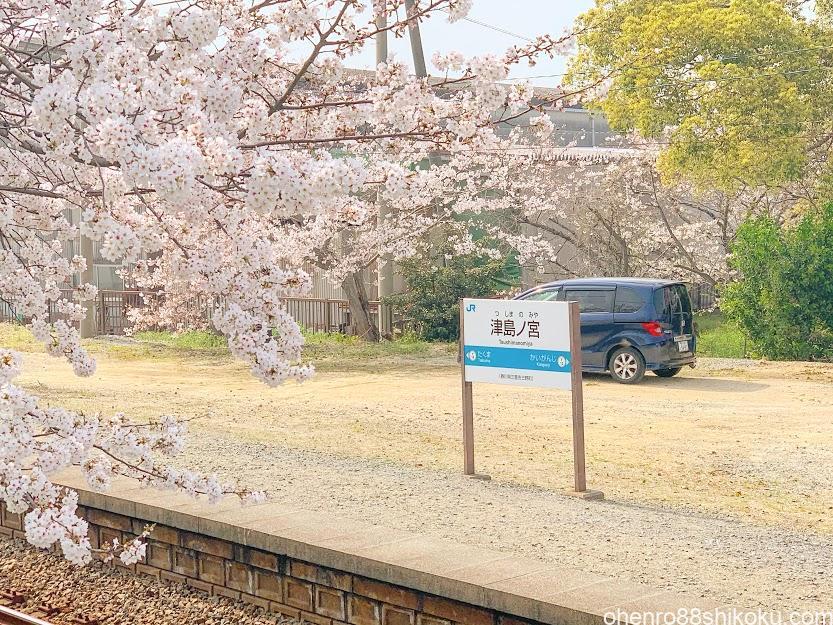 津島ノ宮駅の桜