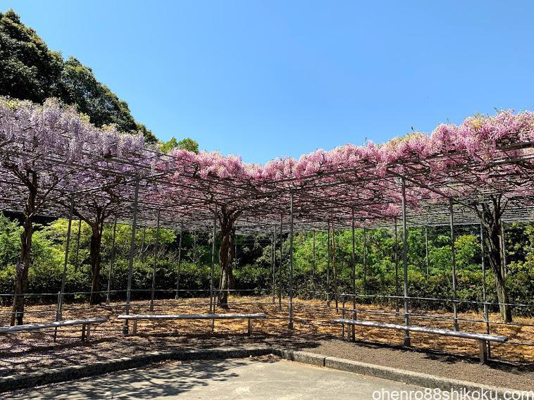 藤尾神社の藤棚