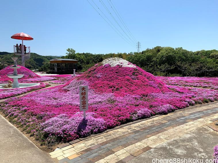 カフェジャルダンの芝桜