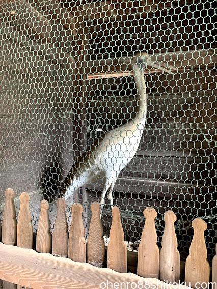 白鳥神社の鶴