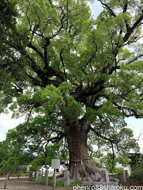 白鳥神社の御神木