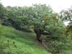 【志々島】樹齢1200年の大楠と世界で一番小さなおうち